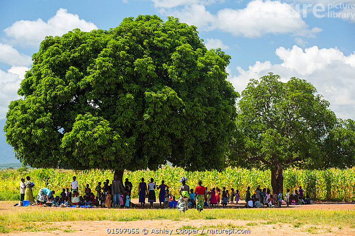 People displaced by the January 2015 floods sheltering from the heat of the sun under a tree in Baani refugee camp, Phalombe, Malawi., Malawi,Africa,Baani,refugee camp,flood,floods,flooding,displaced,charity,NGO,aid,female,black,African,disaster,disaster relief,climate change,global warming,refugee,poor,poverty,child,light,sunlight,boy,girl,face,faces,crowd,shelter,shade,hot,sheltering,,,,, Ashley Cooper