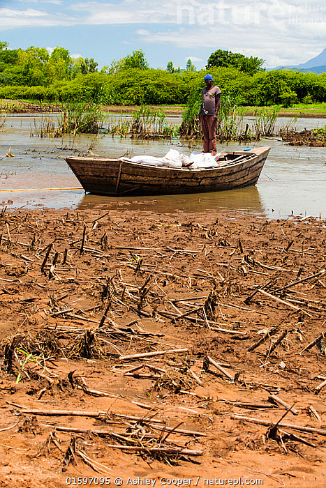Boat ferrying food supplies across flooded farmland near Mulanje, with maize crops destroyed by the floods in the foreground. Malawi, March 2015.  ,  Malawi,Africa,Chiteskesa,refugee camp,flood,floods,flooding,displaced,charity,NGO,aid,female,woman,black,African,disaster,disaster relief,climate change,global warming,refugee,poor,poverty,food supply,food aid,sack,grain,crops,damaged,destroyed,maize,boat,ferry,river,soil,farming,agriculture,,,,  ,  Ashley Cooper