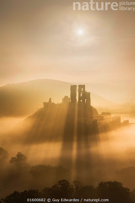 Corfe Castle in morning mist, Corfe, Isle of Purbeck, Dorset, England, UK. September 2013., Atmospheric Mood,Morning,Mornings,Famous Place,Landmark,Europe,Western Europe,UK,Great Britain,England,Dorset,Copy Space,Back Lit,Building,Historic Building,Castle,Castles,Ruins,Ruin,Hill,Shadow,Sunlight,Light Ray,Mist,Sunrise,Landscape,History,Silhouette,Dawn,Negative space,The Past,Natural Light,Long Shadow,Isle of Purbeck,Corfe,, Guy Edwardes