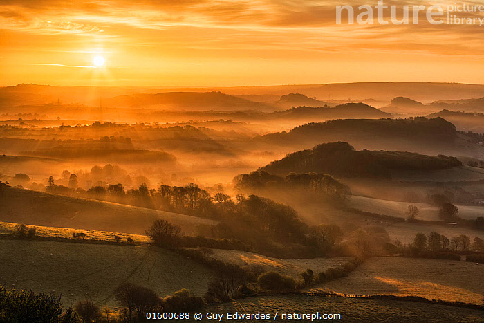 Sunrise over the Marshwood Vale, West Dorset from Quar Hill, Chideock, Dorset, England, UK. May 2013.  ,  Atmospheric Mood,Mood,Calm,Morning,Mornings,Europe,Western Europe,UK,Great Britain,England,Dorset,Back Lit,Plant,Hedgerows,Hedgerow,Hedge,Hedges,Tree,Agricultural Land,Cultivated Land,Field,Hill,Shadow,Sunlight,Light Ray,Mist,Sunrise,Landscape,Countryside,Silhouette,Farmland,Dawn,Natural Light,  ,  Guy Edwardes