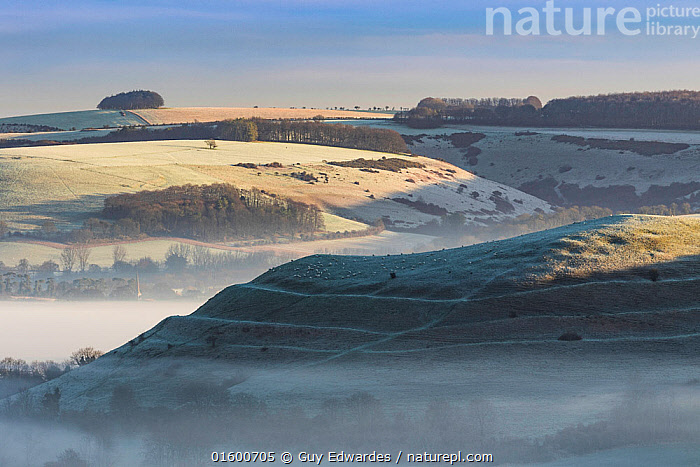 Dawn mist around Hambledon Hill from Bullbarrow Hill, Cranbourne Chase, Dorset, England, UK. February 2016.  ,  Morning,Mornings,Europe,Western Europe,UK,Great Britain,England,Dorset,Building,Military Building,Fortification,Fortifications,Fortress,Fortresses,Fort,Forts,Hill,Mist,Landscape,History,Dawn,Prehistoric,The Past,Iron Age,Hill Fort,  ,  Guy Edwardes