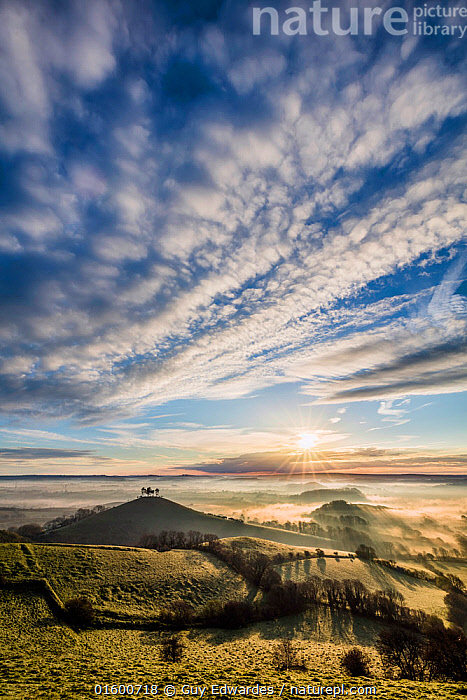 Colmer's Hill, Bridport, Dorset, England, UK. April 2016., Morning,Mornings,Famous Place,Landmark,Europe,Western Europe,UK,Great Britain,England,Dorset,Plant,Hedgerows,Hedgerow,Hedge,Hedges,Tree,Hill,Shadow,Sky,Cloud,Mist,Landscape,Countryside,Colmer&#39,s Hill,Colmers Hill,, Guy Edwardes