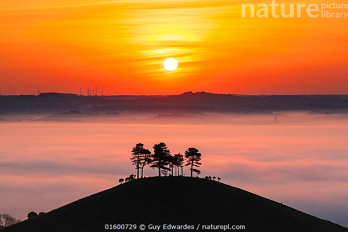 Colmer's Hill at sunrise, Bridport, Dorset, England, UK. May 2014., Morning,Mornings,Famous Place,Landmark,Europe,Western Europe,UK,Great Britain,England,Dorset,Back Lit,Plant,Tree,Hill,Mist,Sunrise,Landscape,Silhouette,The Sun,Dawn,Colmer&#39,s Hill,Colmers Hill,, Guy Edwardes