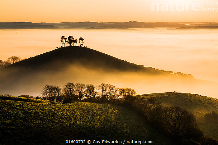 Colmer's Hill in mist, Bridport, Dorset, England, UK. May 2014., Morning,Mornings,Famous Place,Landmark,Europe,Western Europe,UK,Great Britain,England,Dorset,Back Lit,Plant,Tree,Hill,Sky,Cloud,Mist,Sunrise,Landscape,Countryside,Silhouette,Dawn,Colmer&#39,s Hill,Colmers Hill,, Guy Edwardes