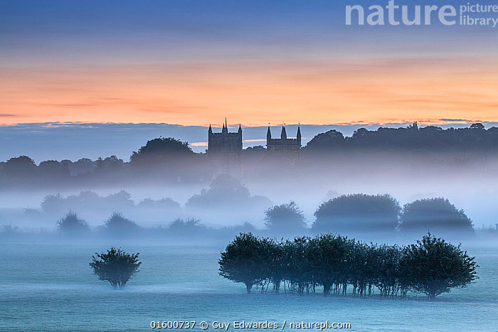 Wimborne Minster at dawn, Dorset, England, UK. August 2015., Morning,Mornings,Europe,Western Europe,UK,Great Britain,England,Dorset,Back Lit,Plant,Tree,Building,Roof Element,Roof Elements,Steeple,Steeples,Spire,Spires,Church,Churches,Sky,Cloud,Sunrise,Landscape,Countryside,Silhouette,Dawn,,, catalogue11, Guy Edwardes