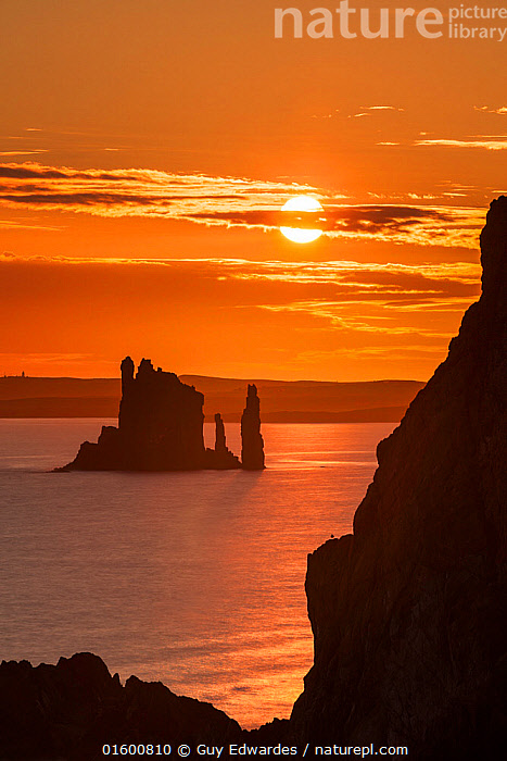 The Drongs sea stacks silhouetted at sunset, Hillswick, Northmavine, Shetland, Shetland Isles, Scotland, UK. August 2014., Erosion,Colour,Orange,Europe,Western Europe,UK,Great Britain,Scotland,Shetland,Back Lit,Island,Islands,Rock Formations,Sky,Ocean,Atlantic Ocean,Sunset,Setting Sun,Sunsets,Landscape,Coast,Marine,Coastal,Water,Geology,Silhouette,Saltwater,Sea,Dusk,North Sea,Landform,, Guy Edwardes