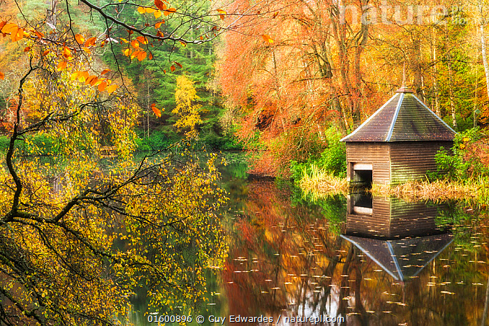 Boat hut on lochshore, Faskally Forest, Pitlochry, Perthshire, Scotland, UK. October 2014., Colour,Orange,Europe,Western Europe,UK,Great Britain,Scotland,Highland,Plant,Leaf,Foliage,Building,Hut,Huts,Reflection,Landscape,Autumn,Woodland,Broadleaf woodland,Freshwater,Lake,Water,Arty shots,Forest,Deciduous,Highlands of Scotland,Perthshire,Loch,, Guy Edwardes