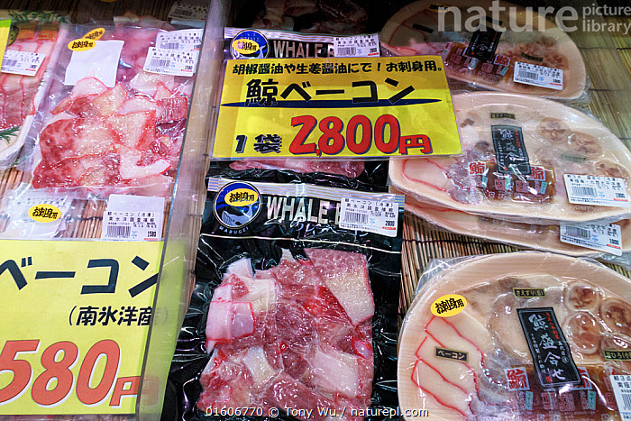 Whale bacon and sashimi for sale. The labels indicates the products are sourced from research whaling in the Southern Ocean. Tore Tore Market, Shirahama, Wakayama Prefecture, Kansai, Honshu, Japan. February 2018.  ,  Animal,Wildlife,Vertebrate,Mammal,Ceteacean,Animalia,Animal,Wildlife,Vertebrate,Mammalia,Mammal,Cetacea,Ceteacean,Asia,East Asia,Japan,Honshu,Food,Meat,Cut Of Meat,Bacon,World Cuisine,Asian Food,Asian Cuisine,Asian Foods,Japanese Cuisine,Japanese Food,Japanese Foods,Sashimi,Market,Environment,Environmental Issues,Biodiversity hotspot,Whale hunting,Conservation issues,Human-wildlife conflict,Controversial,Kansai,Wakayama Prefecture,Shirahama,  ,  Tony Wu