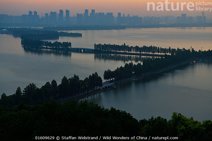 Tree lined causeway over lake, East Lake Greenway park, with the Wuhan skyline behind, Hubei, China. June 2018, Asia,East Asia,China,Plant,Tree,City,Causeway,Causeways,Bridge,Bridges,Reflection,Sunset,Setting Sun,Sunsets,Landscape,Cityscape,Freshwater,Lake,Water,Dusk,, Staffan Widstrand / Wild Wonders of China