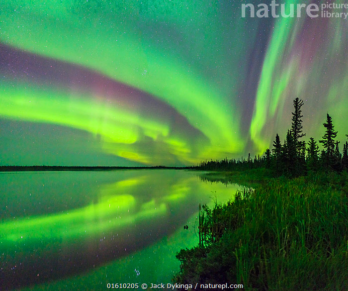 Aurora Borealis reflected in Polar Lake, wetland and conifers silhouetted along shore. Near Great Slave Lake, Northwest Territories, Canada. September 2018.  ,  Spectacular,Atmospheric Mood,Ethereal,Magic,Magical,Colour,Green,Colourful,Pattern,North America,Canada,Northwest Territories,Plant,Tree,Evergreen Tree,Coniferous Tree,Conifers,Reflection,Stars,Sky,Aurora,Auroras,Aurora Borealis,Northern Lights,Landscape,Freshwater,Wetland,Lake,Water,Natural Light,Conifer,night sky,,, catalogue11  ,  Jack Dykinga