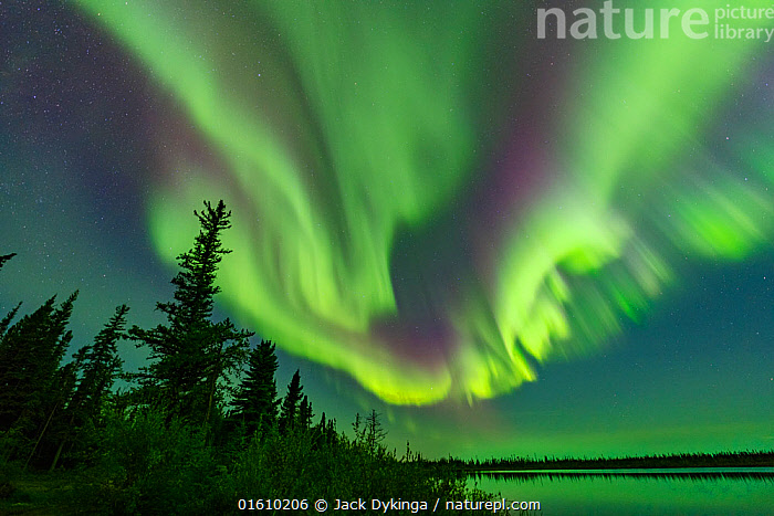 Aurora Borealis display above conifers and Polar Lake. Near Great Slave Lake, Northwest Territories, Canada. September 2018., Ethereal,Magic,Magical,Colour,Green,Colourful,Pattern,Shape,Swirl,Swirling,Swirls,North America,Canada,Northwest Territories,Plant,Tree,Evergreen Tree,Coniferous Tree,Conifers,Reflection,Stars,Sky,Aurora,Auroras,Aurora Borealis,Northern Lights,Landscape,Taiga,Boreal forest,Coniferous forest,Freshwater,Lake,Water,Forest,Natural Light,Conifer,night sky,, Jack Dykinga