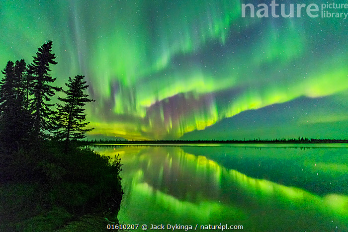 Aurora Borealis reflected in Polar Lake, conifers silhouetted at edge. Near Great Slave Lake, Northwest Territories, Canada. September 2018.  ,  Spectacular,Atmospheric Mood,Ethereal,Magic,Magical,Colour,Green,Colourful,Pattern,Entertainment,Show,North America,Canada,Northwest Territories,Back Lit,Plant,Tree,Evergreen Tree,Coniferous Tree,Conifers,Reflection,Stars,Sky,Aurora,Auroras,Aurora Borealis,Northern Lights,Landscape,Beautiful,Freshwater,Lake,Water,Silhouette,Natural Light,Conifer,night sky,,, catalogue11  ,  Jack Dykinga