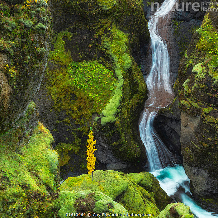 Waterfall in Fjaorargljufur canyon, Kirkjubaejarklaustur, Iceland, August 2017., Autumn,Canyon,Fja�rárgljúfur,Guy Edwardes,Iceland,Kirkjub�jarklaustur,Landscape,Square,Tree,Waterfall,moss,,,Lush,Colour,Green,Europe,Northern Europe,North Europe,Nordic Countries,Scandinavia,Iceland,Photographic Effect,Long Exposure,Canyons,Flowing Water,Waterfall,River,Landscape,Freshwater,Water,Geology,Landform,,, catalogue11, Guy Edwardes
