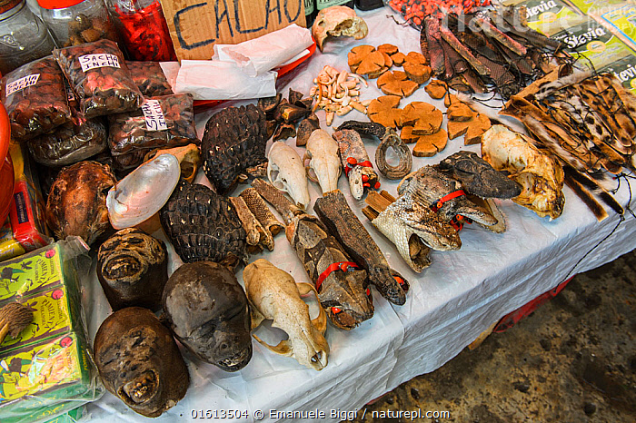 Animal body parts including monkey and snake heads, for sale at Belen market in Iquitos, Peru. . July 2014, Latin America,South America,Peru,Market,Wildlife trade,Conservation issues,Animal trade,Iquitos,Loreto,, Emanuele Biggi