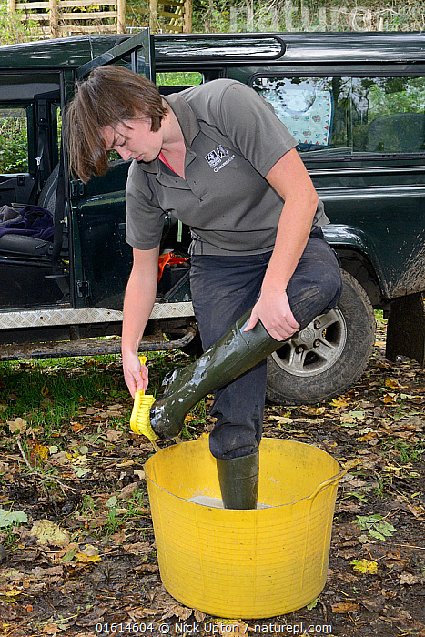 Emma Settle of GWT disinfecting her boots before helping to release White-clawed crayfish (Austropotamobius pallipes) at an ARK site, safe from Signal crayfish (Pacifastacus leniusculus) and Crayfish plague, England, UK, October 2018. Model released.  ,  Animal,Wildlife,Crustacean,Decapod,Crayfish,Signal crayfish,White clawed crayfish,Animalia,Animal,Wildlife,Crustracea,Crustacean,Malacostraca,Decapoda,Decapod,Astacidae,Crayfish,Pacifastacus,Pacifastacus leniusculus,Signal crayfish,Austropotamobius,Austropotamobius pallipes,White clawed crayfish,Astacus pallipes,People,Research,Researching,Europe,Western Europe,UK,Great Britain,England,Science,Conservation,Arthropod,Arthropods,Wildlife conservation,Invertebrate,Translocation,Translocating,Freshwater,Endangered species,threatened,Endangered  ,  Nick Upton