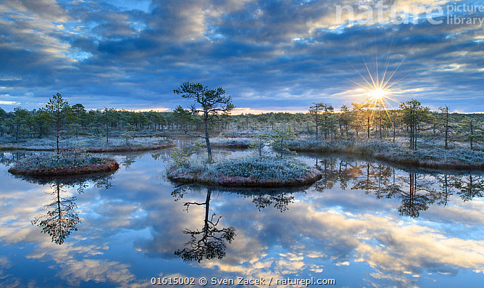 Sunrise over bog with trees reflected in pool. Endla Nature Reserve, Jogevamaa, Central Estonia. October 2015.  ,  Morning,Mornings,Europe,Eastern Europe,East Europe,Baltic Countries,Estonia,Plant,Tree,Island,Islands,Reflection,Sunlight,Light Ray,Sky,Cloud,Sunrise,Landscape,Nature,Nature Reserve,Freshwater,Wetland,Lake,Bog,Water,Dawn,Pool,Natural Light,Jogevamaa County,Jogevamaa,Jogeva County,Endla Nature Reserve,,catalogue12  ,  Sven  Zacek