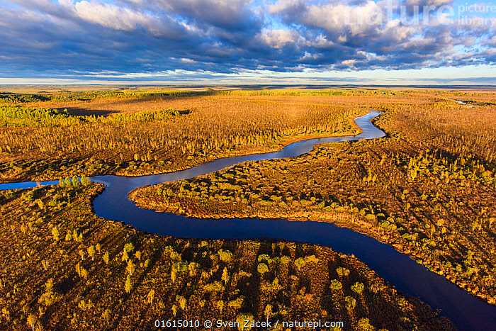 Bog surrounding river in morning light. Emajoe Suursoo Nature Reserve, Tartumaa, Estonia. October 2015., Morning,Mornings,Curve,Europe,Eastern Europe,East Europe,Baltic Countries,Estonia,Aerial View,High Angle View,Plant,Tree,Shadow,Confluence,Confluences,Flowing Water,River,Landscape,Autumn,Nature,Nature Reserve,Freshwater,Wetland,Bog,Swamp,Water,Elevated view,Tartumaa,Emajoe Suursoo Nature Reserve,, Sven  Zacek