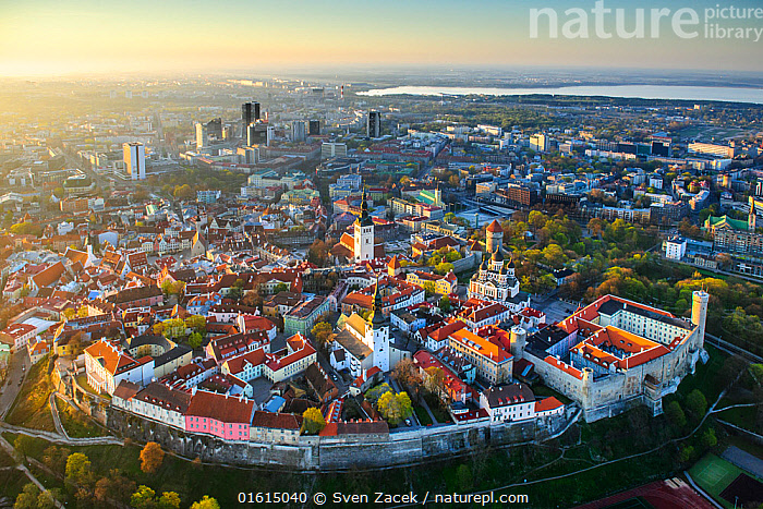 Tallinn city wall and old town, UNESCO World Heritage Site. New town and Lake Ulemiste beyond. In evening light. Harjumaa, Estonia. May 2011., Europe,Eastern Europe,East Europe,Baltic Countries,Estonia,Tallinn,Aerial View,High Angle View,Settlement,Old Town,Old Towns,Town,Towns,Building,Skyscraper,Skyscrapers,Roof,Roofs,Rooftop,Rooftops,Wall,City Wall,City Walls,Town Wall,Town Walls,Landscape,Twilight,Evening,Freshwater,Lake,Water,Protected area,UNESCO World Heritage Site,Elevated view,, Sven  Zacek
