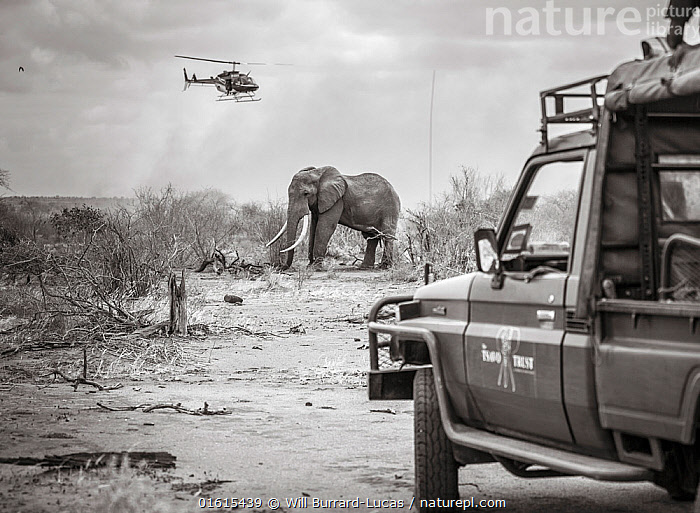 Nature Picture Library - Black and white image of Tsavo