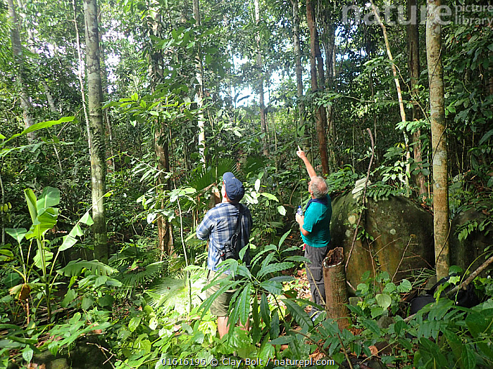 Natural history photographer Clay Bolt and writer Glen Chilton examine a termite mound while searching for Wallace's giant bee (Megachile pluto) Mollucas, Indonesia. January 2019  ,  Animal,Wildlife,Arthropod,Insect,Leaf cutting bee,Leafcutter bee,Solitary bee,Wallace&#39,s giant bee,Animalia,Animal,Wildlife,Hexapoda,Arthropod,Invertebrate,Hexapod,Arthropoda,Insecta,Insect,Hymenoptera,Megachilidae,Leaf cutting bee,Bee,Apocrita,Megachile,Leafcutter bee,Leaf cutter bee,People,Man,Photographer,Photographers,Scientist,Scientists,Research,Researching,Endangered,Asia,South East Asia,Indonesia,Oceania,Science,Forest,Conservation,Biodiversity hotspot,Discovery,Solitary bee,Moluccas,Megachile pluto,Wallace&#39,s giant bee,Rediscovery,Vulnerable,Endangered species,Endangered  ,  Clay Bolt