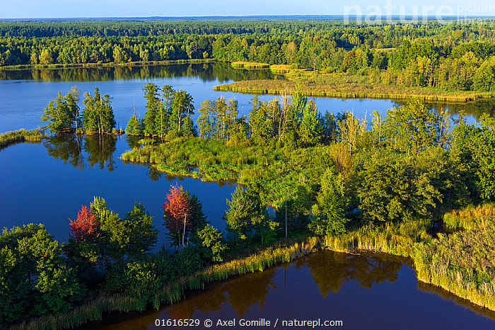 Aerial view of wetlands landscape, Wolf (Canis lupus) habitat, Saxony, Germany, September.  ,  Animal,Wildlife,Vertebrate,Mammal,Carnivore,Canid,Grey Wolf,Animalia,Animal,Wildlife,Vertebrate,Mammalia,Mammal,Carnivora,Carnivore,Canidae,Canid,Canis,Canis lupus,Grey Wolf,Common Wolf,Wolf,Europe,Western Europe,Germany,Saxony,Aerial View,High Angle View,Restoration,Wetland,Conservation,Rewilding,Elevated view,  ,  Axel  Gomille