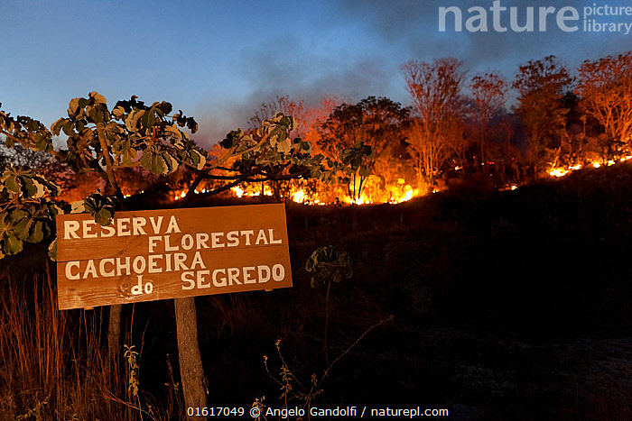 Forest fire in the Cerrado during dry season. Chapada dos Veadeiros National Park, Goias, Brazil. September 2010., Burning,Dark,Latin America,South America,Brazil,Information,Fire,Natural Disaster,Forest Fire,Forest Fires,Night,Reserve,Forest,Cerrado,Biodiversity hotspot,Biodiversity hotspots,Protected area,National Park,Goias,Chapada dos Veadeiros National Park,,,catalogue12, Angelo Gandolfi