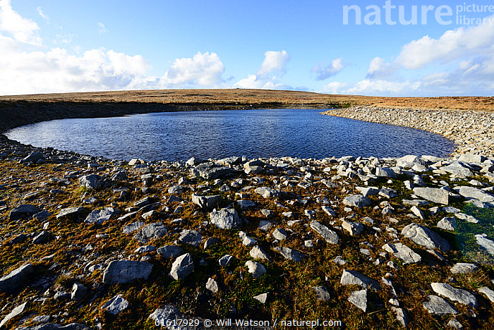 A natural doline pond with exposed sandstone rocks from the South Wales Lower Coal Measures, Carboniferous Period. Mynd Llangatwg, Brecon Beacons National Park, Breconshire, Wales, November 2018., Europe,Western Europe,UK,Great Britain,Wales,Rock,Sandstone,Freshwater,Pond,Water,Reserve,Protected area,National Park,Brecon Beacons National Park,, Will Watson
