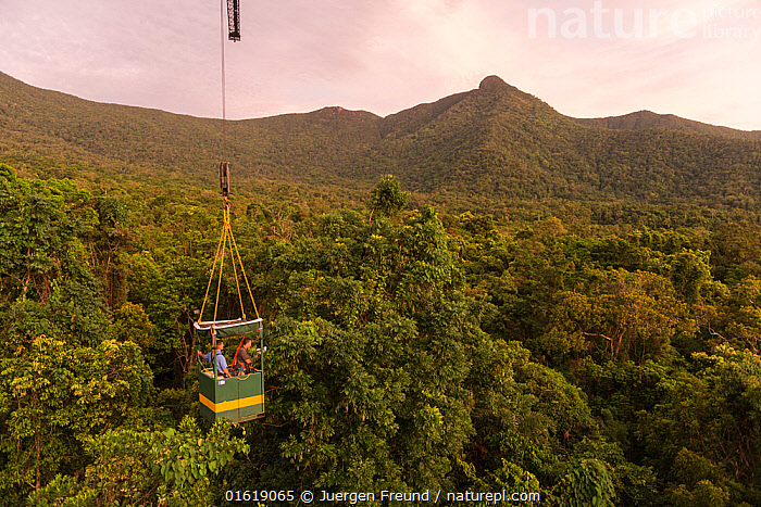 Scientists studying response to wet-dry seasonal transition in rainforest trees, in basket lifted by crane. Daintree rainforest observatory, Queensland, Australia. February 2015  ,  People,Man,Research,Researching,Australasia,Australia,Queensland,Plant,Tree,Tree Canopy,Tree Canopies,Science,Rainforest,Tropical rainforest,Forest,,catalogue12,JURGEN  ,  Juergen Freund