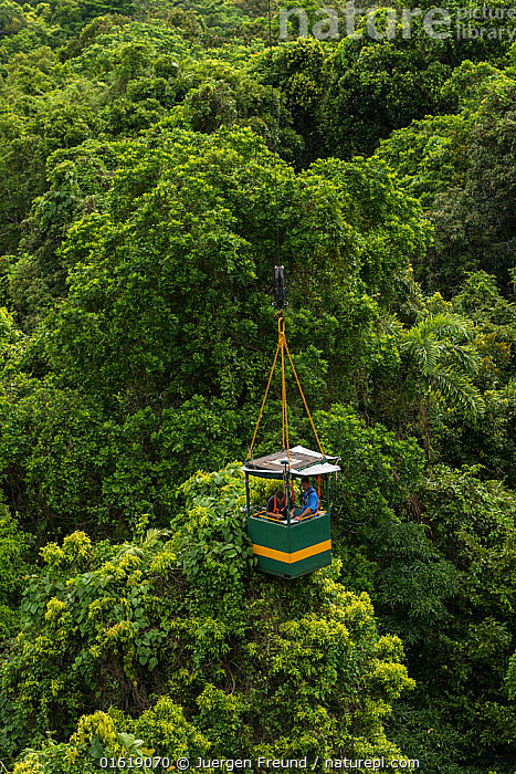 Scientists studying response to wet-dry seasonal transition in rainforest trees, in basket lifted by crane. Daintree rainforest observatory, Queensland, Australia. February 2015  ,  People,Man,Research,Researching,Australasia,Australia,Queensland,Plant,Tree,Tree Canopy,Tree Canopies,Science,Rainforest,Tropical rainforest,Forest,,catalogue12  ,  Jurgen Freund