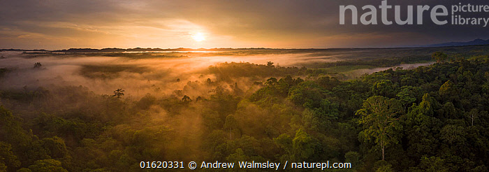 Aerial view of primary rainforest in North Sumatra. September 2018.  ,  Asia,South East Asia,Indonesia,Panoramic,Aerial View,High Angle View,Sunrise,Landscape,Beautiful,Restoration,Science,Rainforest,Tropical rainforest,Forest,Conservation,Biodiversity hotspot,Sumatra,Rewilding,Dawn,Elevated view,Drone,Drone shot,Drone shots,  ,  Andrew Walmsley