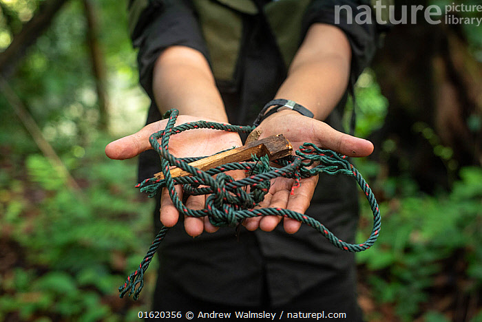 Snare held in human hands - rangers collect data and destroy snares in primary rainforest, in order to protect native wildlife such as elephants, rhinos, tigers and orangutans. September 2018.  ,  People,Asia,South East Asia,Indonesia,Hand,Trap,Traps,Science,Rainforest,Tropical rainforest,Forest,Conservation,Biodiversity hotspot,Sumatra,  ,  Andrew Walmsley