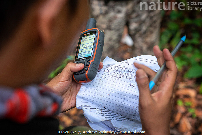 Rangers collecting data in primary rainforest, protecting the native wildlife such as elephants, rhinos, tigers and orangutans. September 2018.  ,  People,Asia,South East Asia,Indonesia,Hand,Science,Rainforest,Tropical rainforest,Forest,Conservation,Biodiversity hotspot,Sumatra,  ,  Andrew Walmsley