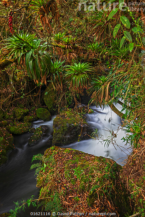 Papallacta river flowing through cloud forest landscape with fern covered trees, Papallacta, Tropical Andes, Ecuador, July  ,  Latin America,South America,Ecuador,Photographic Effect,Long Exposure,Flowing Water,River,Rainforest,Tropical rainforest,Freshwater,Water,Andes,Forest,  ,  David  Pattyn