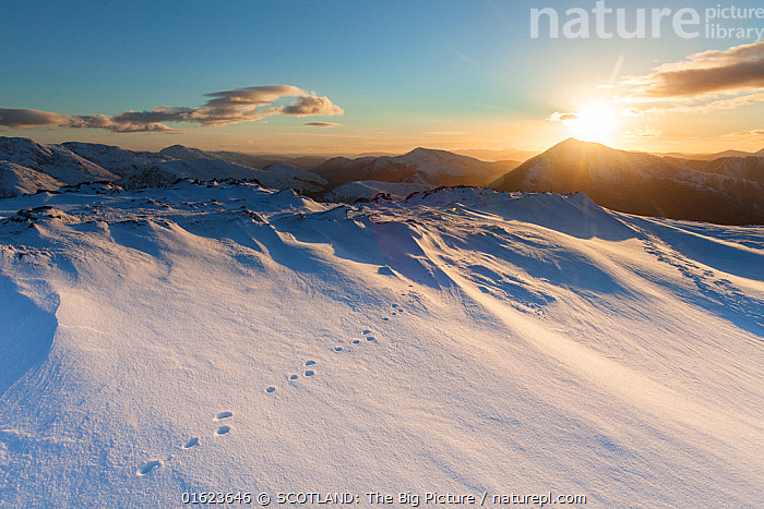 Mountain hare footprints in snow on mountain top in Glen Coe, Lochaber, Scotland, UK.February, Temperature,Cold,Europe,Western Europe,UK,Great Britain,Scotland,Snow,Landscape,Winter,SCOTLAND: The Big Picture,Lochaber,Mark Hamblin,, SCOTLAND: The Big Picture