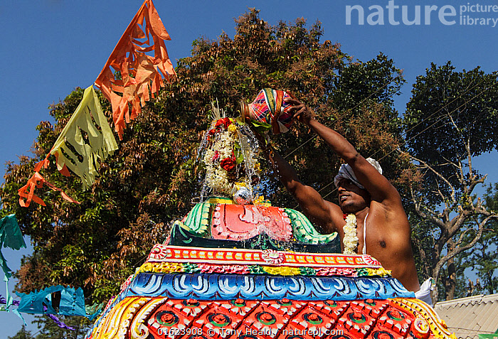 Man pouring holy water over top of temple in Kumbhabhishekam, a Hindu ritual. Pandalur, Tamil Nadu, India. 2014.  ,  Pouring,Pour,Tipping,People,Man,Asia,Indian Subcontinent,India,Building,Temple,Temples,Religion,Eastern Religion,Eastern Religions,Hinduism,Ritual,  ,  Tony Heald