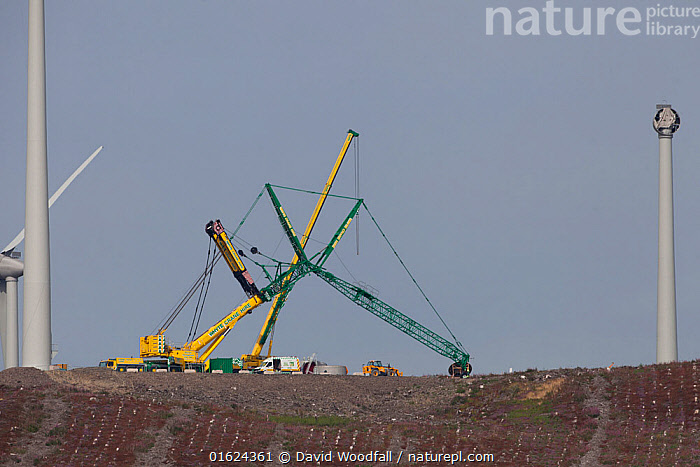 Wind turbine construction on former forestry in Upland Wales, Denbighshire, Wales, UK. August 2017.  ,  Construction of Wind Farn,Cranes,Denbigh moor,Electicity generation,Energy policy,Environmental Issues,National Assembly for Wales .National Energy Policy,Planning decision,Planning issues in the landscape,Pylon construction,Welsh energy,climate change,environment,keeping the lights on,renewable energy,wind power,windy,,,Equipment,Power Equipment,Turbine,Wind Turbine,Construction,Building,Environment,Environmental Issues,Power supply,Sustainable power,Wind power,Energy,Wind energy,  ,  David  Woodfall