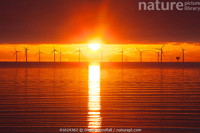 Sunrise over offshore wind turbine farm, Essex, England, UK, December., Electricity,Environmental Issues,Essex coast,Goverment subsidise denergy,Graphic,North sea at dawn,Orange,Turbines,Wind Turbines,Wind turbines at Dawn,calm sea,clean electricity,clean energy,climate change,coast,coastal scene with pylons,enery for the future,environmental,first light,fossill free energy,generation of electricity,pwer for th future,rising sun,sun,symbolic of clean energy,the environment,tranquil sea,wind,wind generated power,,,Colour,Orange,Europe,Western Europe,UK,Great Britain,England,Essex,Back Lit,Equipment,Power Equipment,Turbine,Wind Turbine,Sunrise,Environment,Environmental Issues,Power supply,Coast,Coastal,Silhouette,Sustainable power,Wind power,Energy,The Sun,Wind energy,Dawn,, David  Woodfall