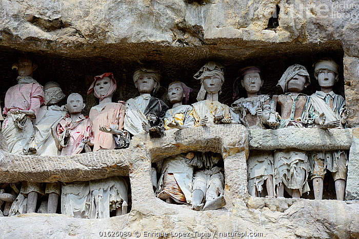 Tau tau, effigies of the dead carved in wood, in walls of Tana Toraja cemetery. The Toraja culture of West and South Sulawesi revolves around death with funeral ceremonies an important part of daily life. Indonesia. 2015.  ,  People,Asian Ethnicity,Asian,Asians,Asia,South East Asia,Indonesia,Art,Carvings,Cemetery,Rock,Religion,Death,Biodiversity hotspot,Sulawesi,Wallacea,South Sulawesi,Indonesian Ethnicity,Toraja,Tana Toraja,  ,  Enrique Lopez-Tapia
