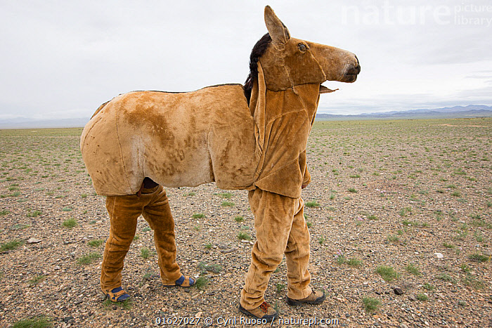 Mongolian wild ass / Khulan (Equus hemionus hemionus) costume prototype unsuccessful in allowing researchers to approach Khulan for scientific purposes. Great Gobi B Strictly Protected Area, Mongolia. August 2018., Animal,Wildlife,Vertebrate,Mammal,Odd toed ungulate,Asian Wild Ass,Animalia,Animal,Wildlife,Vertebrate,Mammalia,Mammal,Perissodactyla,Odd toed ungulate,Equidae,Equus,Equus hemionus,Asian Wild Ass,Asiatic Wild Ass,Kulan,Research,Researching,Asia,East Asia,Mongolia,Independent Mongolia,Outer Mongolia,Clothing,Dressing Up,Costume,Science,Conservation,Onager,Great Gobi B Strictly Protected Area,Gobi B Strictly Protected Area,Equus hemionus hemionus,Khulan,Mongolian kulan,Mongolian khulan,Mongolian wild ass,Endangered species,threatened,Endangered, Cyril Ruoso
