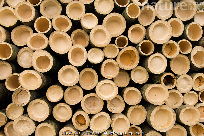 Cut bamboo stems stacked in a pile, end on. Anhui Province, China.  ,  Plant,Vascular plant,Flowering plant,Monocot,Grass,Plantae,Plant,Tracheophyta,Vascular plant,Magnoliopsida,Flowering plant,Angiosperm,Seed plant,Spermatophyte,Spermatophytina,Angiospermae,Poales,Monocot,Monocotyledon,Lilianae,Poaceae,Grass,True grass,Gramineae,Stack,Pattern,Shape,Circle,Asia,East Asia,China,Stem,  ,  Heather Angel