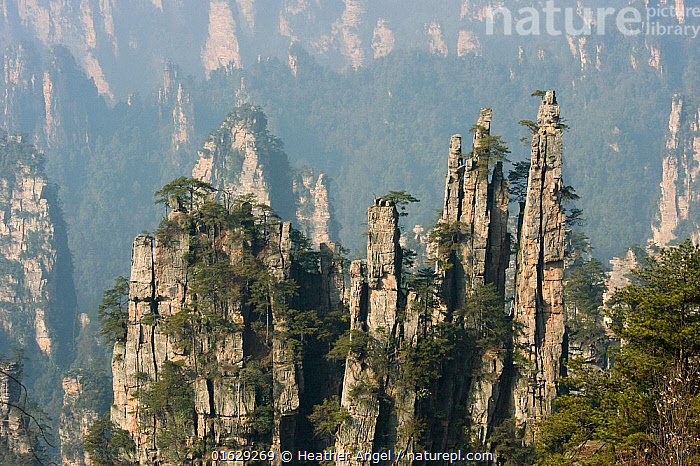 Conifers on sandstone pinnacles, Imperial Pen Peak, Emperor Peak, Zhangjiajie National Forest Park, Wulingyuan Scenic Area, UNESCO World Heritage Site, Hunan Province, China. 2010.  ,  Asia,East Asia,China,Rock Formations,Monolith,Pinnacles,The Pinnacles,Rock,Sandstone,Landscape,Reserve,Geology,Protected area,UNESCO World Heritage Site,National Park,Karst,Landform,Wulingyuan Scenic Area,Zhangjiajie National Forest Park,  ,  Heather Angel