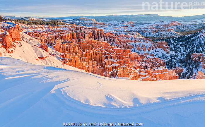 Inspiration point covered in snow, Bryce Canyon National Park, USA, January.  ,  American,Temperature,Cold,North America,USA,Western USA,Southwest USA,Utah,Rock Formations,Snow,Landscape,Winter,Geology,American,United States of America,Landform,,,catalogue12  ,  Jack Dykinga