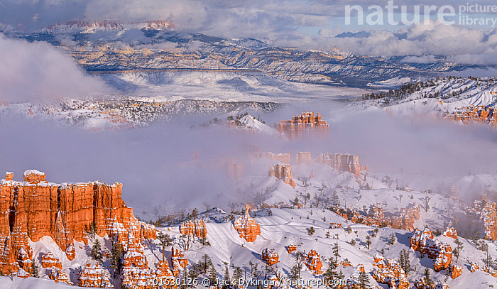 Landscape of hoodoos in snow at sunrise, Bryce Canyon National Park, Utah, USA, January.  ,  American,Temperature,Cold,North America,USA,Western USA,Southwest USA,Utah,Rock Formations,Snow,Landscape,Winter,Reserve,Geology,Protected area,National Park,Bryce Canyon National Park,American,United States of America,Landform,,,catalogue12  ,  Jack Dykinga