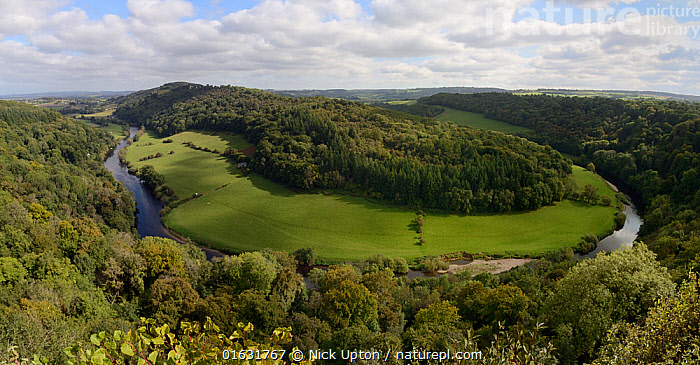 Forest of Dean and River Wye overview from Symond's Yat Rock, with primarliy deciduous trees, close to sites for Pine Marten (Martes martes) releases by the Forest of Dean and River Wye Pine Marten Project, Gloucestershire, UK, September 2019., Panoramic,Wide angle view,Fisheye lens,Rivers,Landscapes,Releases,Release,England,English,Conservation,Reintroductions,Reintroduced,British,Mammals,Vertebrates,United Kingdom,Europe,Woods,Woodland,Forest,European,Carnivores,Carnivora,European Pine Marten,Mustelidae,Mustelids,Martens,Autumn,,Animal,Wildlife,Vertebrate,Mammal,Carnivore,Mustelid,Marten,European Pine Martin,Animalia,Animal,Wildlife,Vertebrate,Mammalia,Mammal,Carnivora,Carnivore,Mustelidae,Mustelid,Martes,Marten,Martes martes,European Pine Martin,Pine Marten,Europe,Western Europe,UK,Great Britain,England,Gloucestershire,Plant,Tree,Landscape,Habitat,Forest,Conservation,Wildlife conservation,Reintroduction,Reintroduced,Translocation,Translocating,, Nick Upton