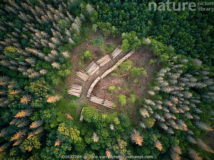 Aerial view of clearing with felled logs in Bialowieza Forest UNESCO World Heritage Site, Poland. Highly commended in the Wildlife Photojournalism Category of the Wildlife Photographer of the Year Awards 2019., Europe,Eastern Europe,East Europe,Poland,Aerial View,High Angle View,Plant,Tree,Environment,Environmental Issues,Environmental Damage,Deforestation,Forestry,Natural Resources,Reserve,Forest,Competition winner,Protected area,UNESCO World Heritage Site,Elevated view,Drone,Drone shot,Photography award,, Joris  van Alphen
