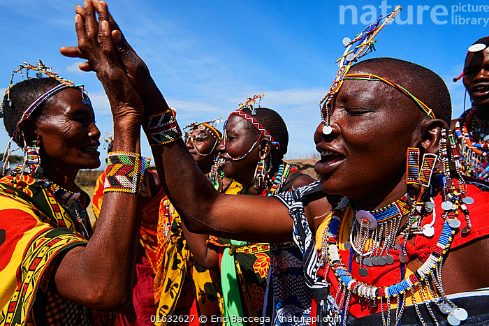 Group of Maasai women singing and dancing in traditional dress and adorned with bead work, Masai Mara National Reserve, Kenya.  ,  People,African Descent,Native African Ethnicity,Masai,Masais,Africa,East Africa,Kenya,Clothing,Traditional Clothing,Culture,African Culture,African,Masai Culture,Indigenous Culture,Reserve,Protected area,National Park,Tribes,Local people,Masaai,Native African culture,  ,  Eric Baccega