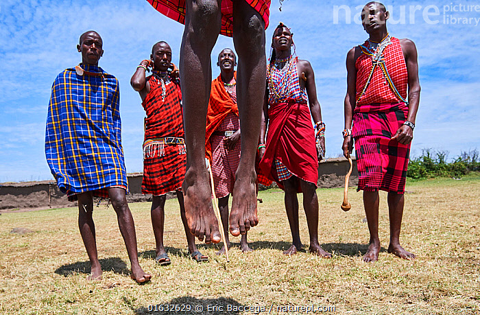 Young Maasai men performing a traditional jumping dance, Masai Mara National Reserve, Kenya.  ,  People,African Descent,Native African Ethnicity,Masai,Masais,Man,Traditional,Africa,East Africa,Kenya,Clothing,Traditional Clothing,Culture,African Culture,African,Masai Culture,Indigenous Culture,Reserve,Protected area,National Park,Tribes,Local people,Masaai,Native African culture,  ,  Eric Baccega