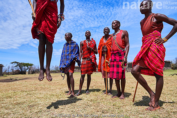 Young Maasai men performing a traditional jumping dance, Masai Mara National Reserve, Kenya., People,African Descent,Native African Ethnicity,Masai,Masais,Man,Traditional,Africa,East Africa,Kenya,Clothing,Traditional Clothing,Culture,African Culture,African,Masai Culture,Indigenous Culture,Reserve,Protected area,National Park,Tribes,Local people,Masaai,Native African culture,, Eric Baccega