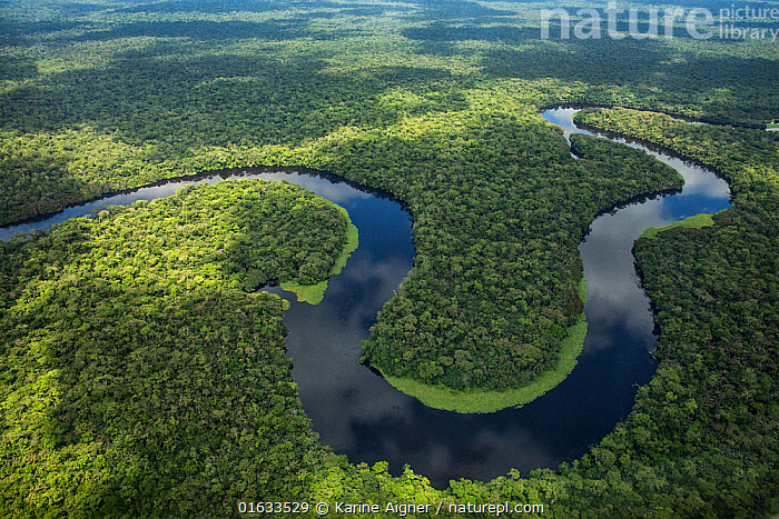 Aerial view of tropical rainforest and meandering river, Salonga National Park, Democratic Republic of Congo May 2017.  ,  Africa,Central Africa,Democratic Republic of the Congo,Aerial View,High Angle View,Flowing Water,River,Landscape,Rainforest,Tropical rainforest,Freshwater,Water,Forest,Elevated view,DRC,  ,  Karine Aigner