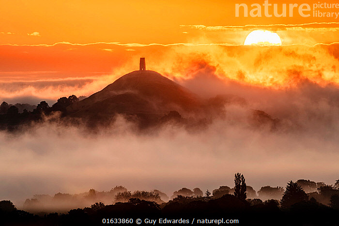 Glastonbury Tor at sunrise surrounded by early morning mist. View from Walton Hill, Somerset, England, UK. June 2019.  ,  Catalogue13,Morning,Mornings,Spirituality,Spiritual,Europe,Western Europe,UK,Great Britain,England,Somerset,Back Lit,Plant,Hill,Sky,Mist,Sunrise,Landscape,Silhouette,Somerset levels,Dawn,Catalogue13,Hills,Hillsides,Skies,Sunrises,Landscapes,Silhouettes  ,  Guy Edwardes